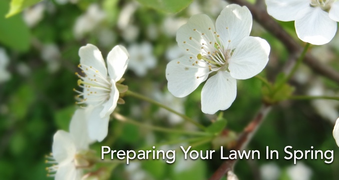 Preparing Your Lawn In Spring